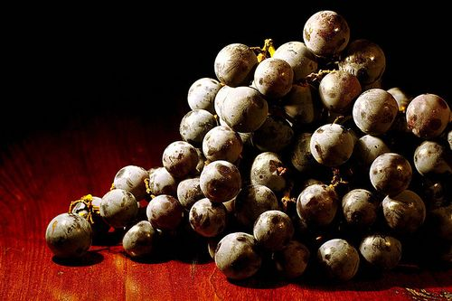 Concord_Grapes_photo_by_Jonathan_Cohen_cc_nc