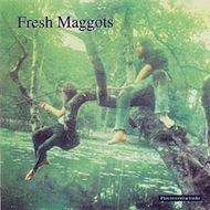 Fresh_maggots