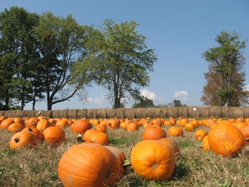 Pumpkin_minefield